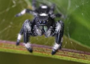 10-30-14 Jumping spider