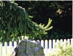 2015-6-3 rock + evergreen