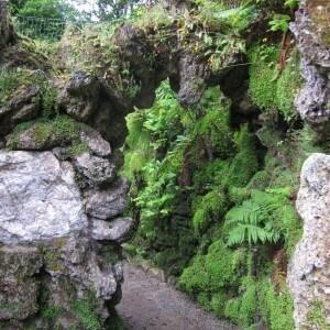 2015-7-31 Ireland moss and stone