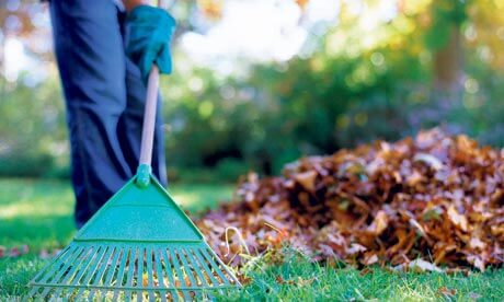 2015-10-20 CD rake and leaves