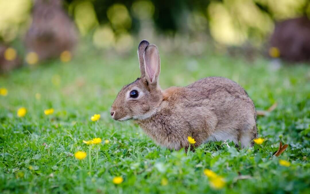 Keeping Rabbits Away