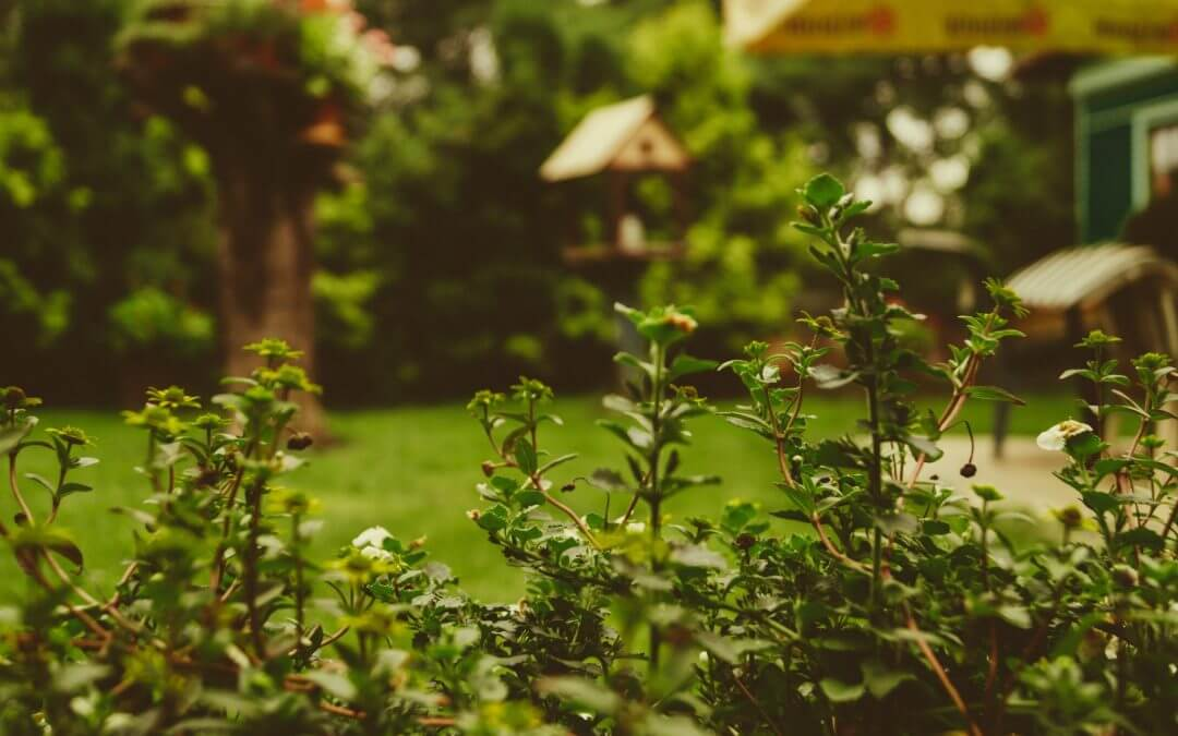 Planning Your Outdoor Space